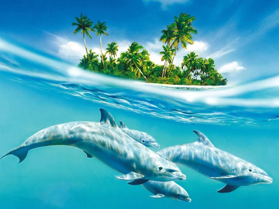 9 tropical wallpaper9 600x338