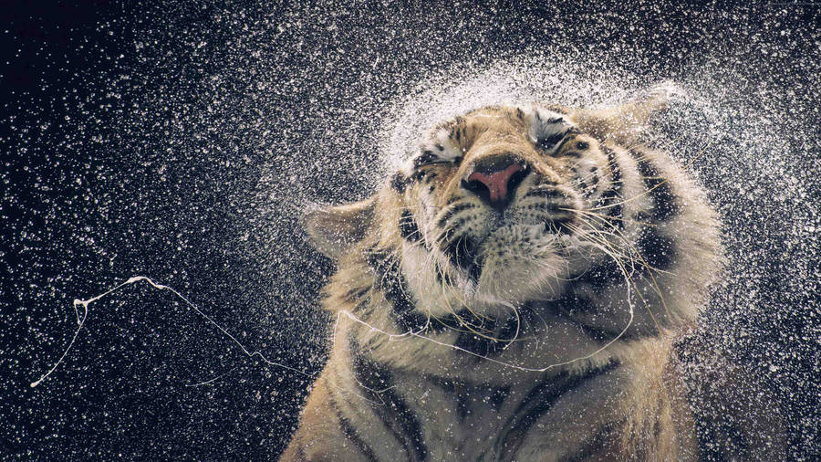 Tiger Shroff Photos in Denim Shirt