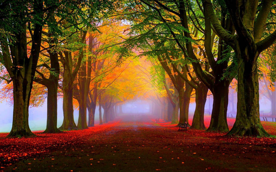 Forest autumn hill fog trees landscape wallpaper
