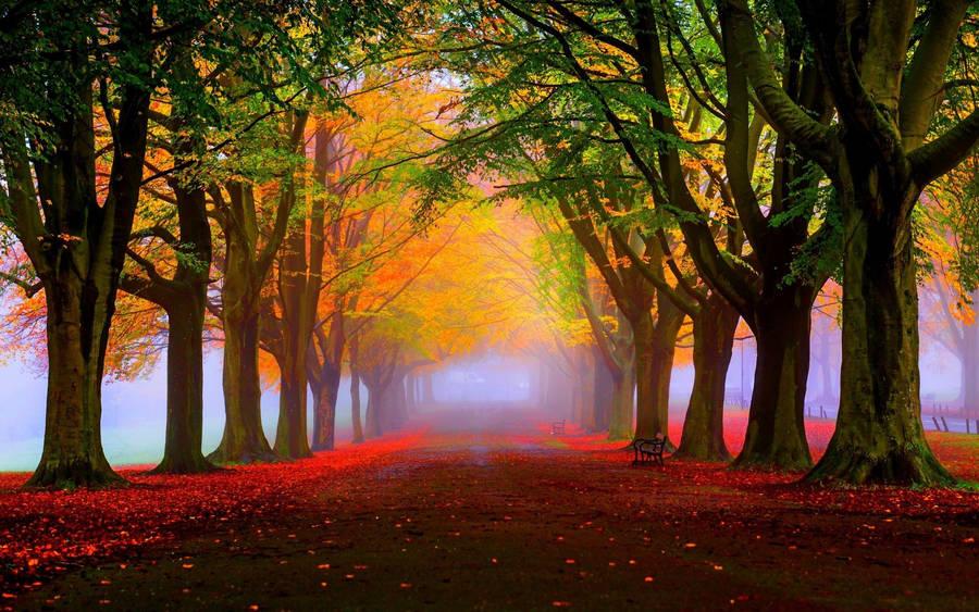 Foggy Autumn Road Wallpaper 1920x1080