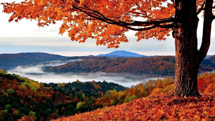 Nature tree leaf river autumn
