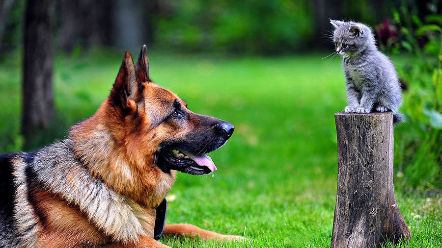 Funny Cat and Dog Wallpaper