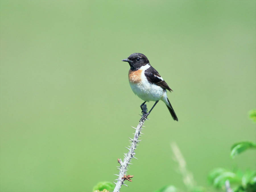 http://birds-photo.com/wp-content/gallery/voron/_13-03-2009_1457__dsc7679_m.jpg