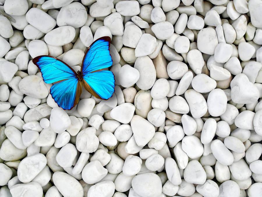 Бабочка1  № 2342622 бесплатно
