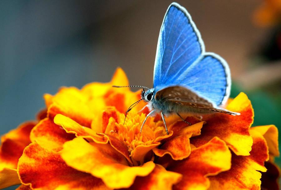 Cute Cartoon Butterfly and Kitten, free beautiful wallpaper download ...