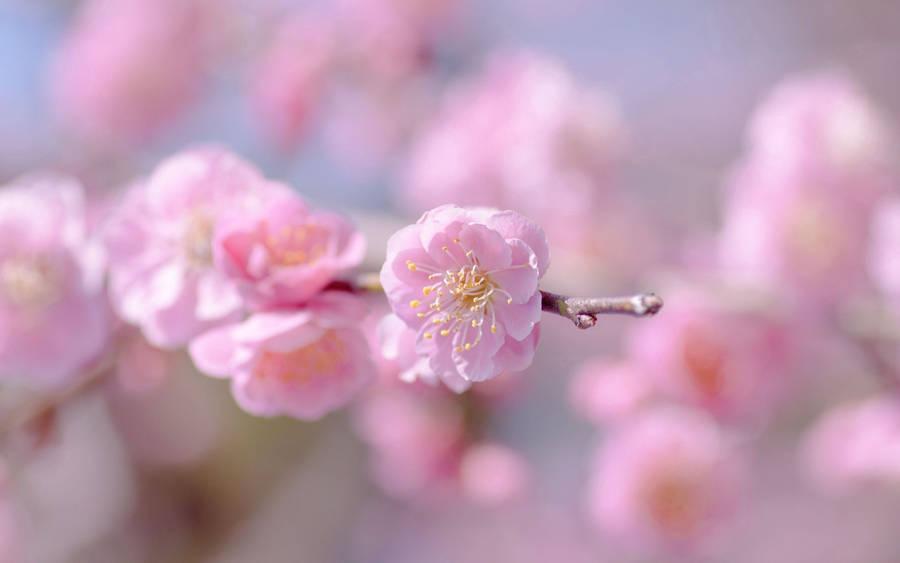 x 1080 - Flower Garden Paintings