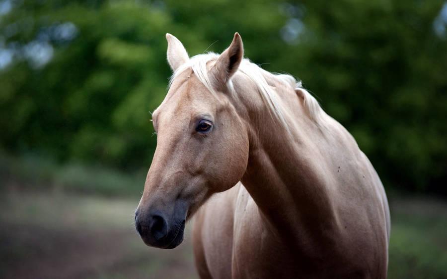 Brown Rise Desperation Magnificent Horse Image Wallpaper