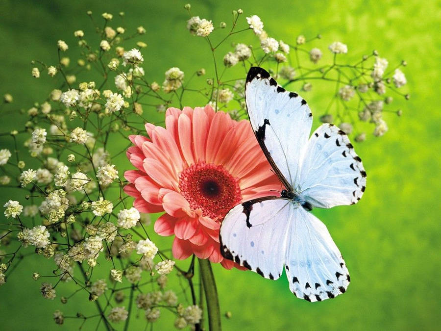 Beautiful Flowers And Butterflies Great Grunge
