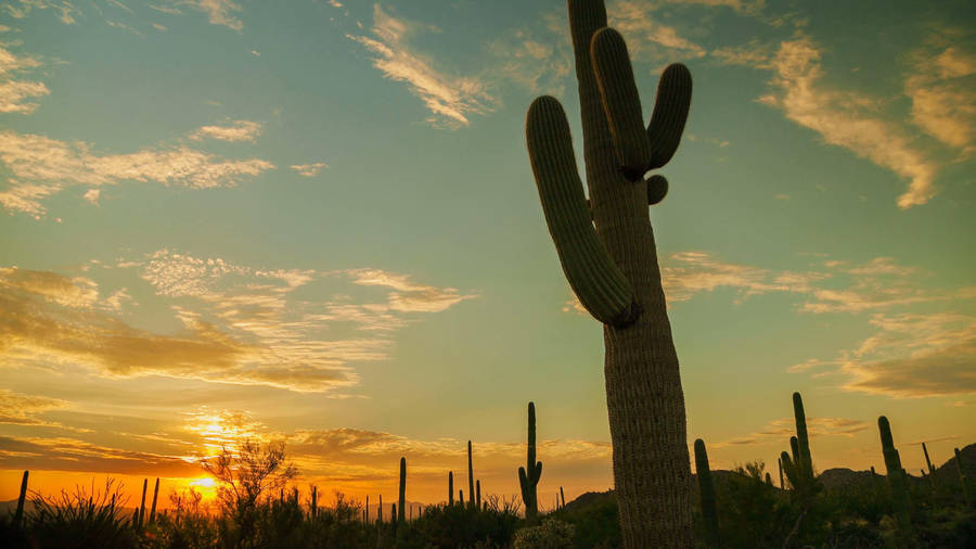 Cactus Sunrise, Palos Verde Peninsula, California