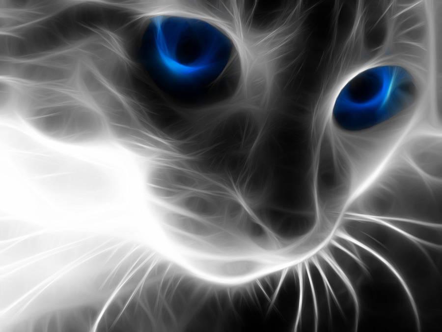 Top Wallpaper Night Lantern - lantern-night-cat-art-hd-wallpaper  Perfect Image Reference-282578.jpg?156492