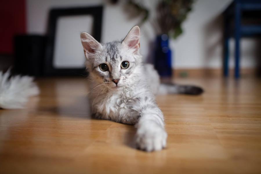 Cute Cat In Black And White Wallpaper 1680x1050