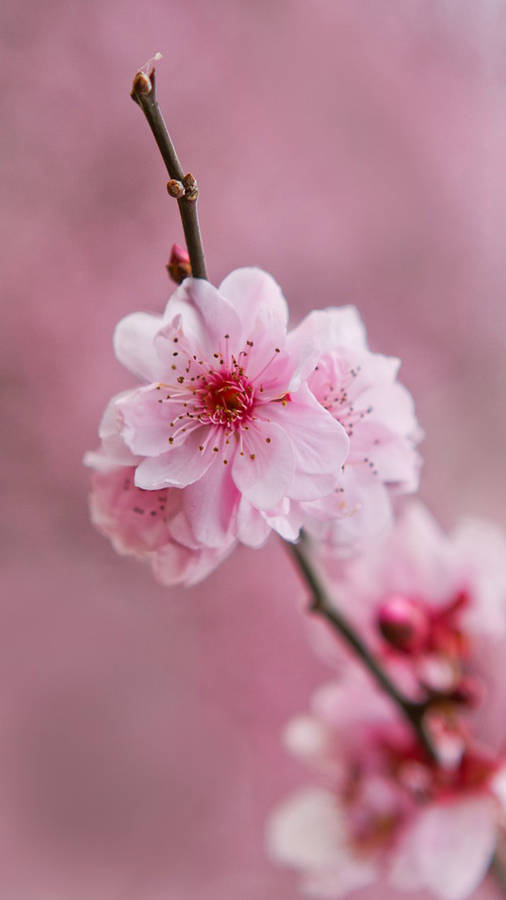 Small Pink And Purple Flowers Wallpaper Flower Wallpapers 13075