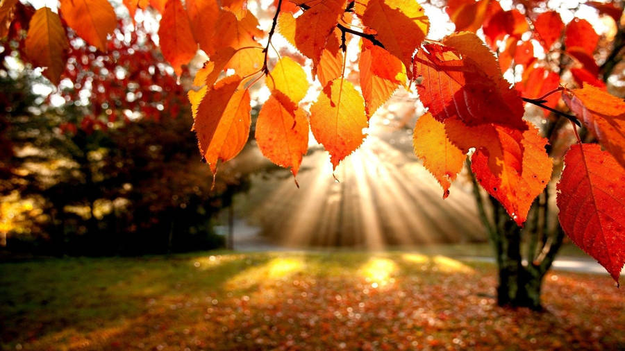 Yellow Orange Fall Foliage Widescreen Wallpaper Wide