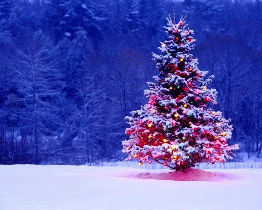 Santa Hiding Behind The Christmas Tree Wallpaper 3840x2160
