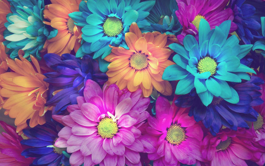 Free Flowers iPhone Wallpapers