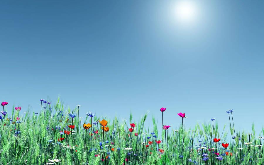 Cute spring flower -  X 1440