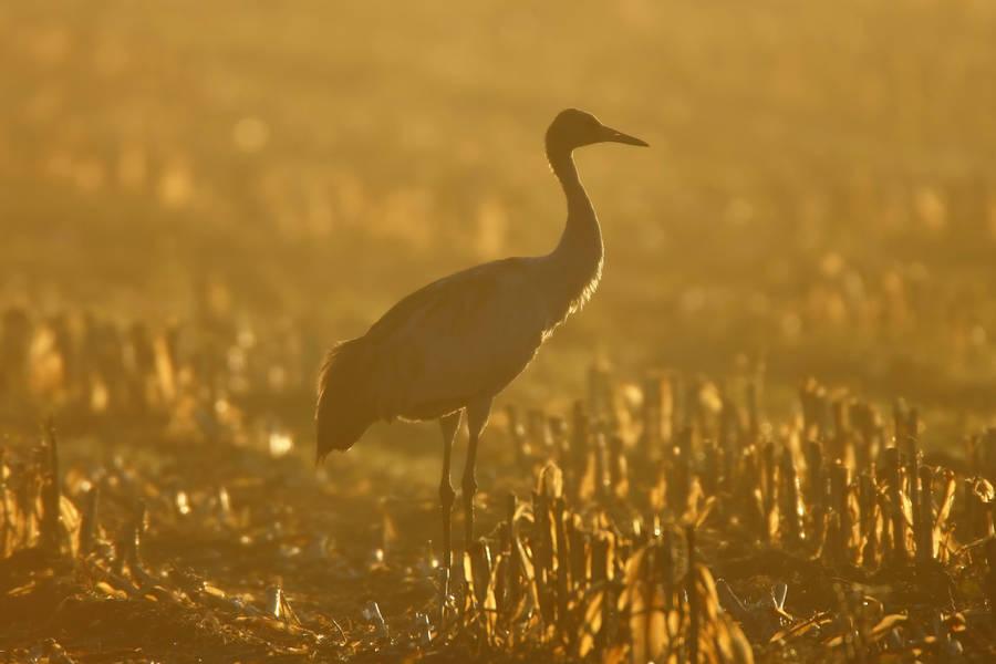 Birds At Sunset Wallpaper 43994