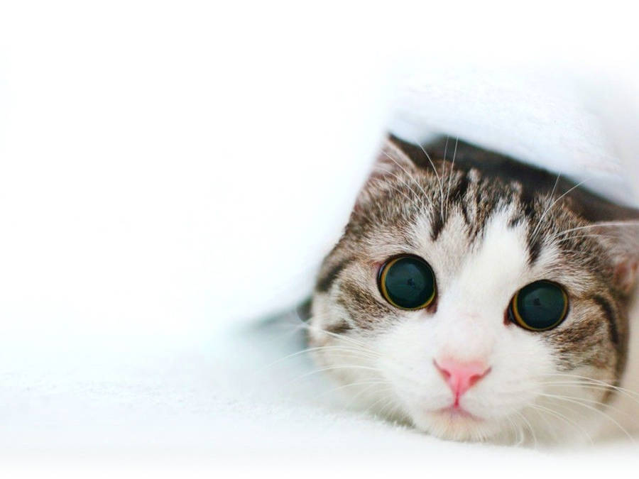 Cute Kitten Wallpaper   Top Wallpapers