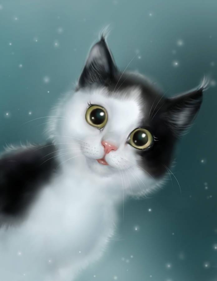 Black And White Fur Cat Widescreen Wallpaper