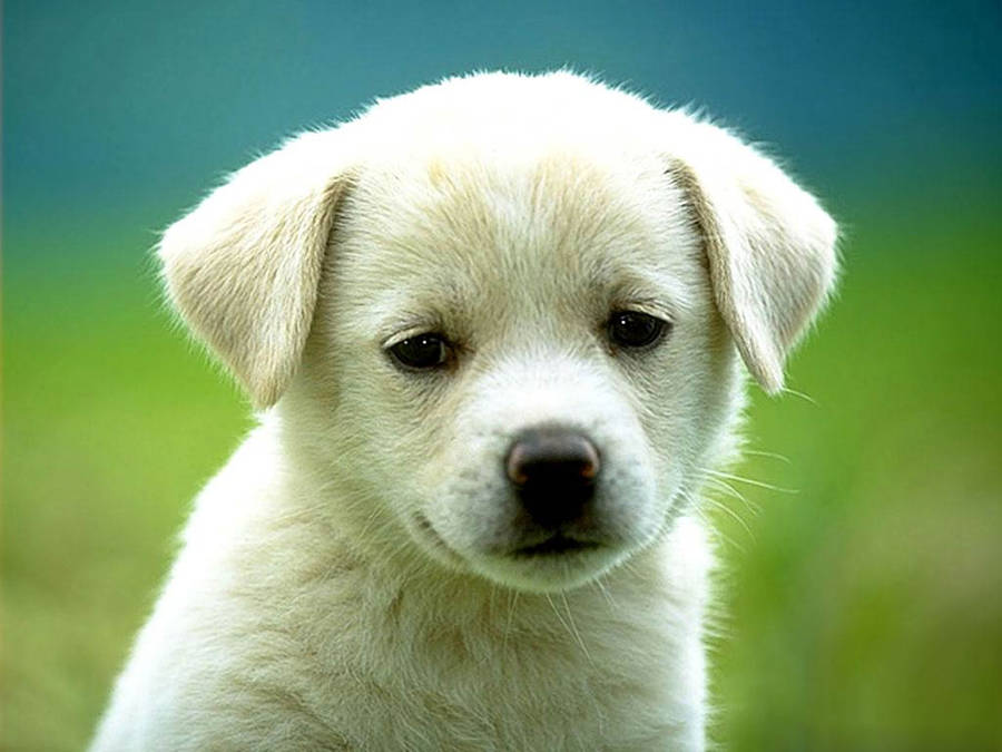 images of baby dogs - photo #1