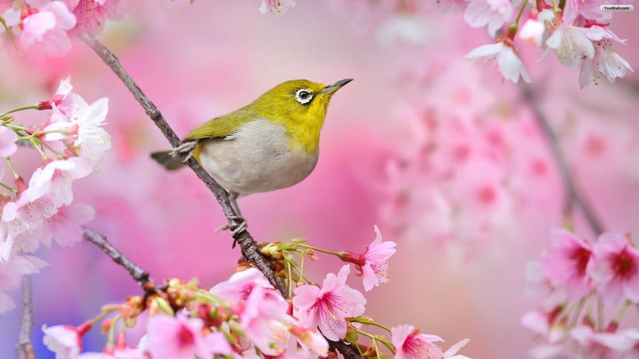 http://birds-photo.com