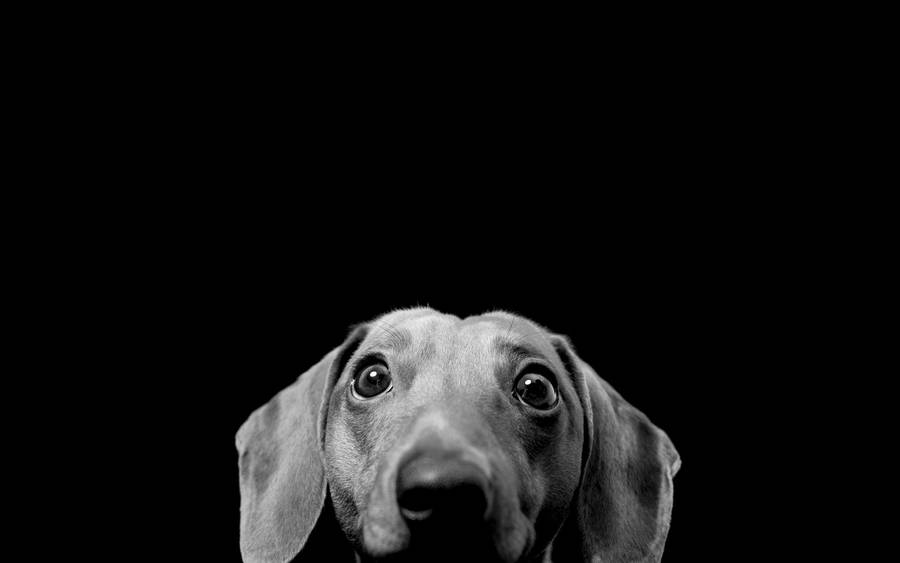 Animal B W Dog | All Wallpapers