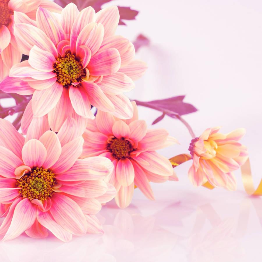30 beautiful free flower hd wallpapers designsdeck blossomed pink rose wallpaper mightylinksfo
