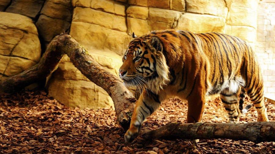 Cute tiger cub widescreen wallpaper wide wallpapers x 1600 altavistaventures Gallery