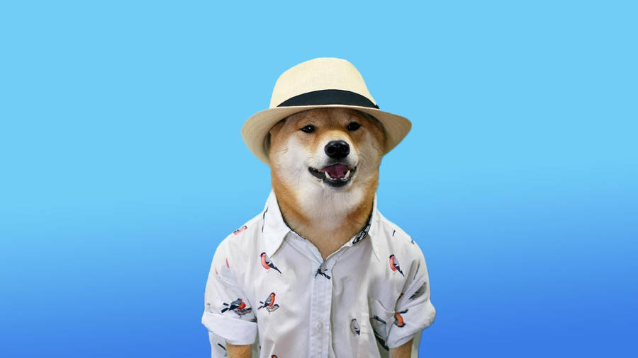 so doge - so doge, wow much impressed, such cool