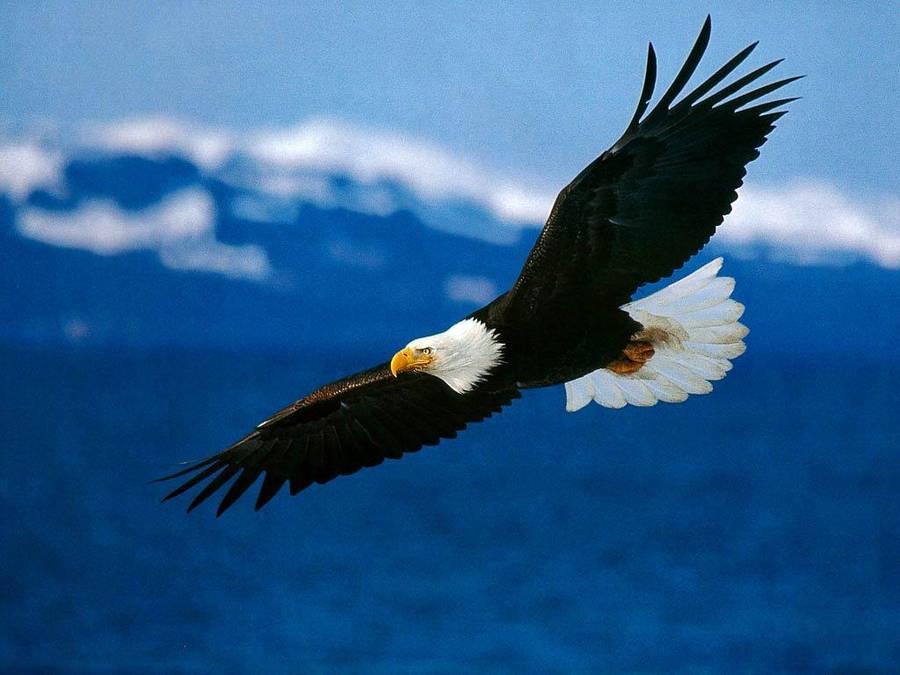 Eagle Union Jack Wallpaper 36635