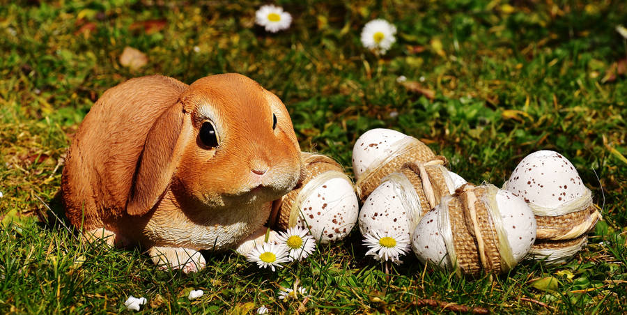 story of the easter bunny hd wallpapers widescreen
