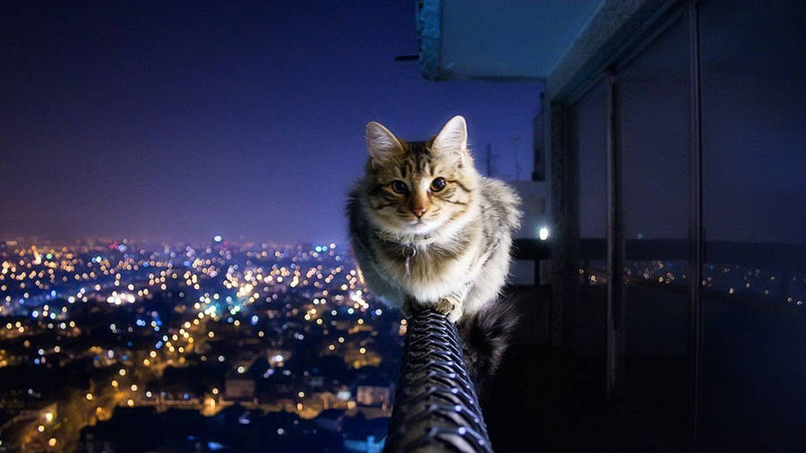 cute baby cat wallpaper - animal wallpapers - #27967