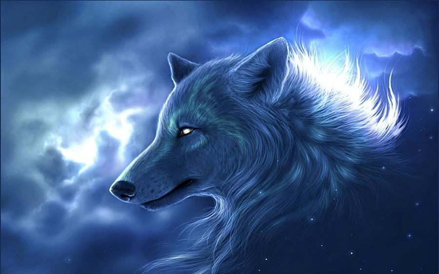 Staring Black Wolf Wallpaper Digital Art Wallpapers 48085