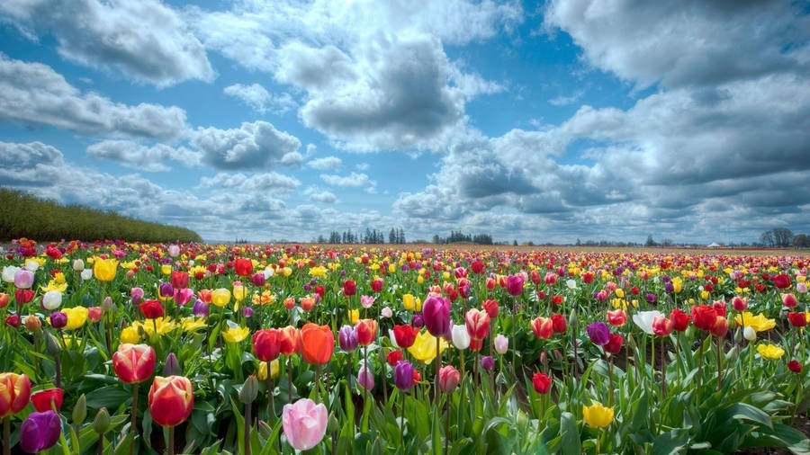 Striking Spring Flower Wallpapers