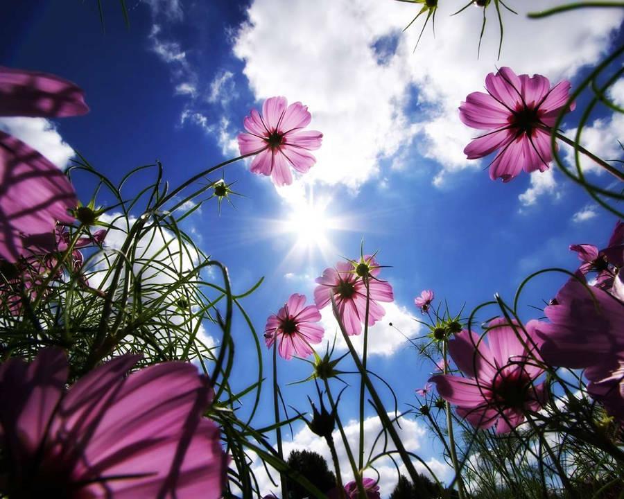 Цветы рододендрон цена и фото
