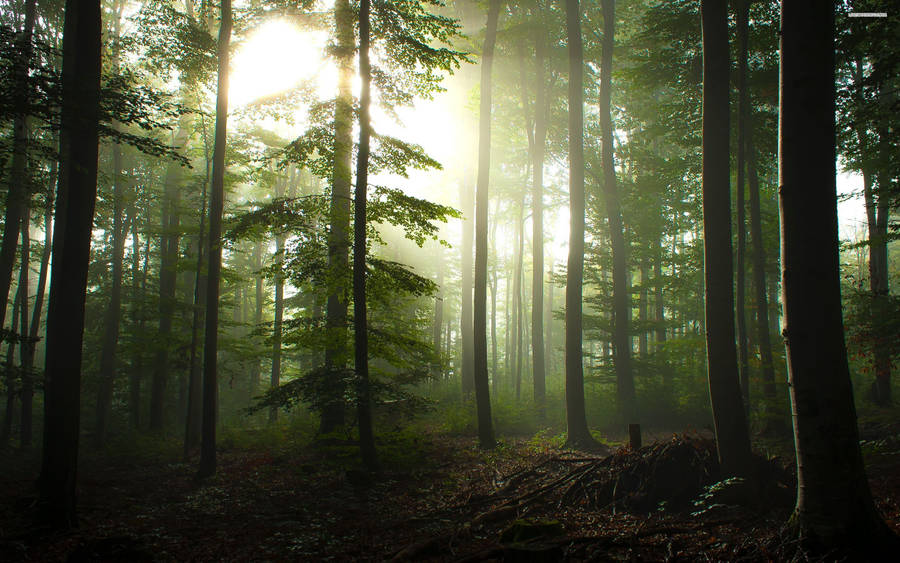 Forest River Wallpaper Nature Wallpapers 24232