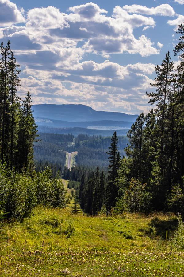 Creekside Meditation- fly fishing art, Montana landscape by Mary Maxam