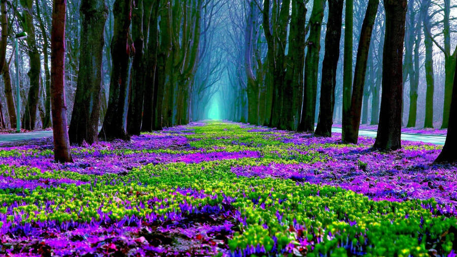 Mystical Forest Wallpaper Nature Wallpapers 24603
