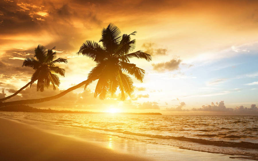 Exotic Island Beach Palm Trees Ocean Widescreen Wallpaper