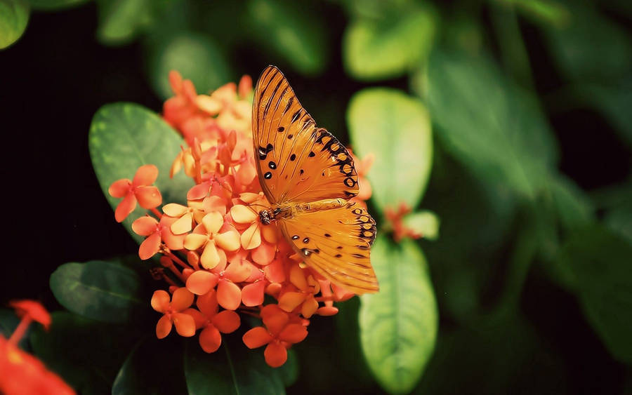 Orange Butterfly HD Wallpaper  Hintergrund  2560x1440