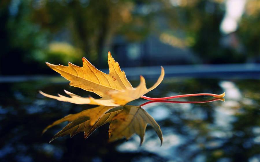 Autumn leaves nikon d700 hd wallpapers widescreen 2560x1600