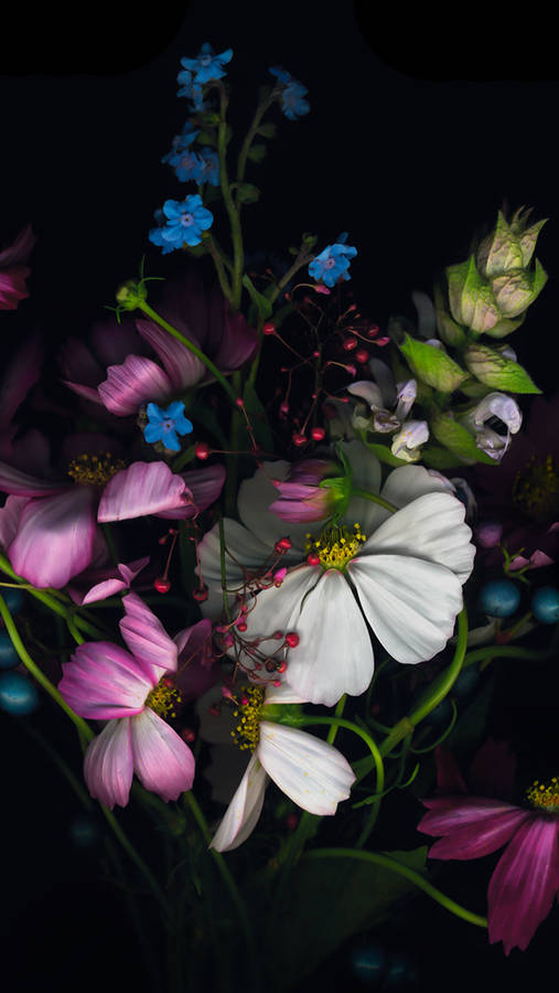 papers.co-ml88-dark-bw-flower-bokeh-rain-nature-4-wallpaper