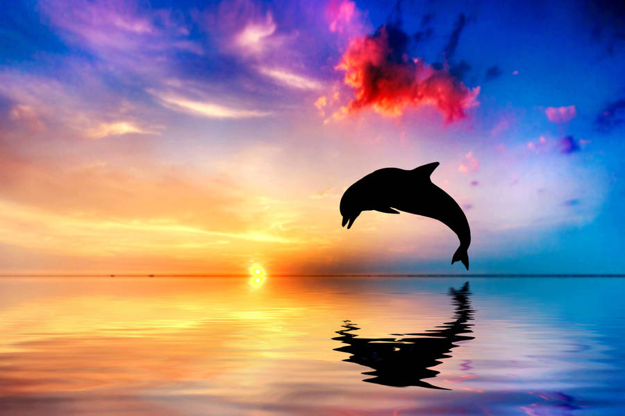 Living 3D Dolphins wallpaper