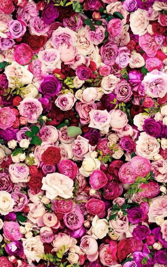 Red Rose Pomander Wallpaper