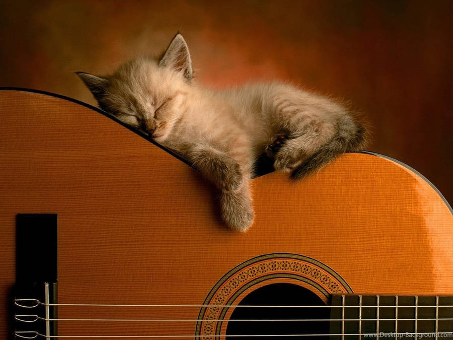 Black Electric Guitar Gibson Les Paul Widescreen Wallpaper