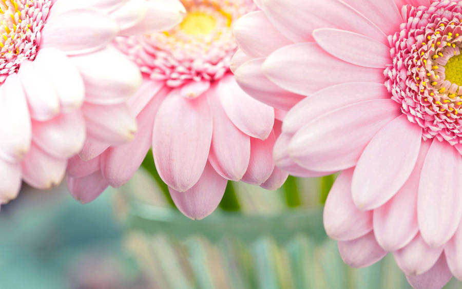 Simple White and Pink Flowers - Wallpaper #34433