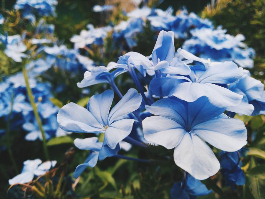 Цветы в снегу  обои для рабочего стола картинки фото