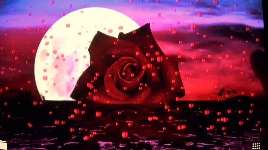 Silver Hearts And Rose Petals Widescreen Wallpaper