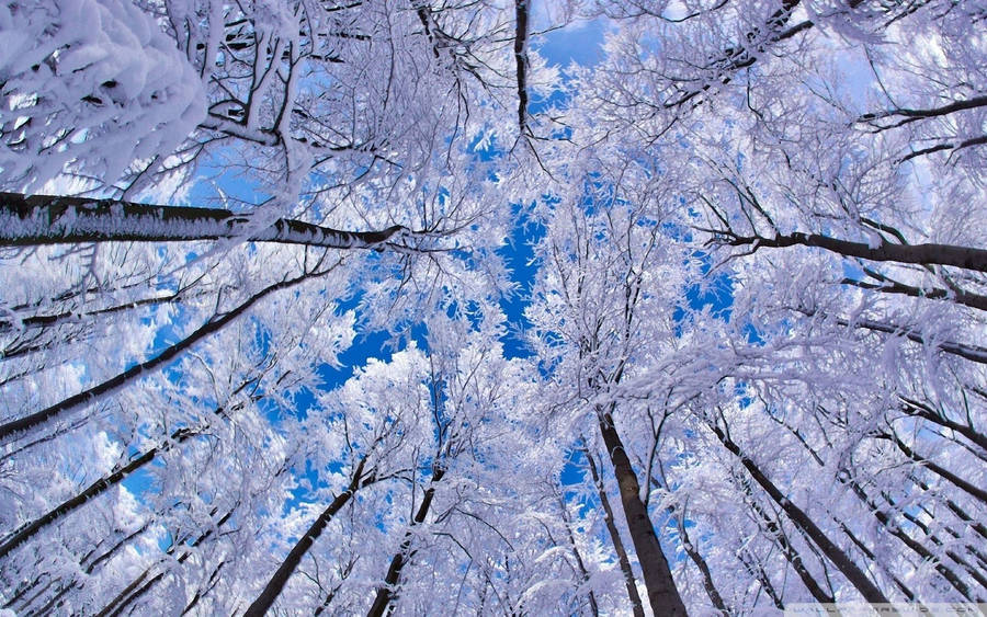 Download black and white winter scenery wallpaper standard 1280 x 1024