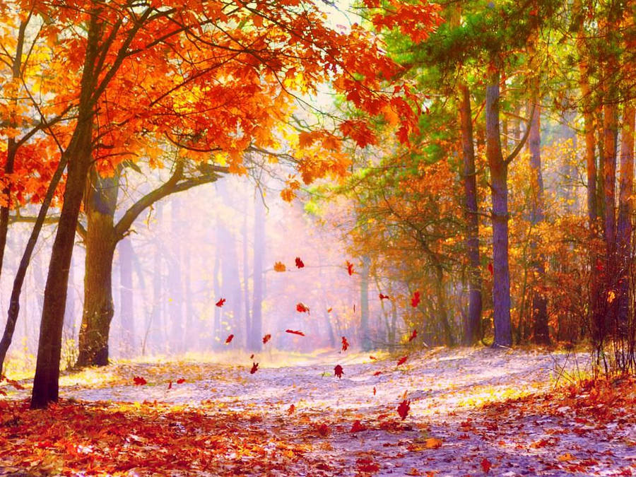 Fall season alley in the forest widescreen wallpaper wide x 1200 voltagebd Images